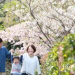 玉縄桜が咲きはじめています^^