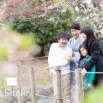 桜の親子お写真会、企画中♪