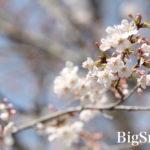 [親子お写真会ギャラリー]入学おめでとう!@フラワーセンター【2021.03.18】
